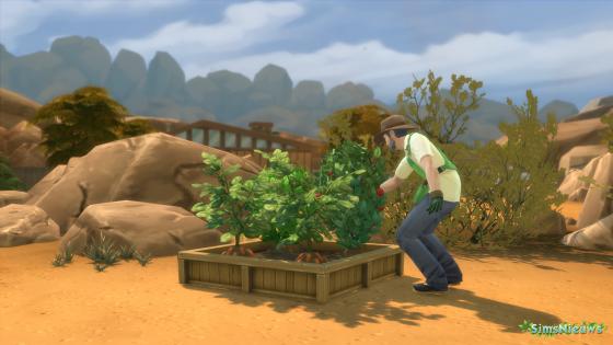 De Sims 4: Tuinieren