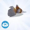 Exotische goudvis
