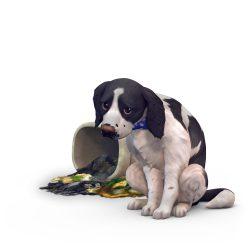 Perfecte huisdier quiz: Lastige hond