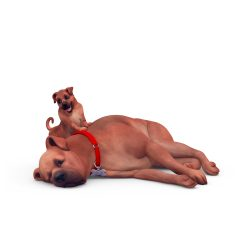 Perfecte huisdier quiz: Luie hond