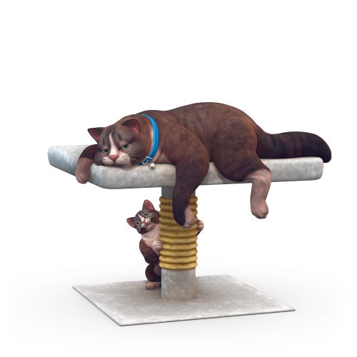 Perfecte huisdier quiz: Luie kat