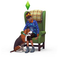Perfecte huisdier quiz: Trouwe hond
