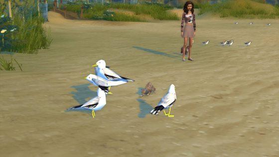 De Sims 4 collecties: Veren (Honden en Katten)