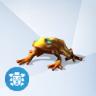 Saffier Gouden Kiemkikker